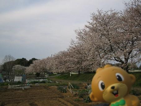 大崎公園6.jpg
