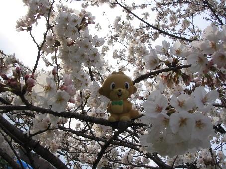 大崎公園7.jpg