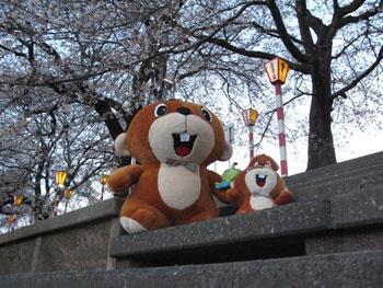 oogawara2010_01.jpg