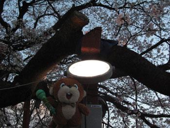 oogawara2010_06.jpg