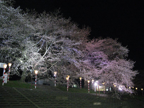oogawara2010_09.jpg