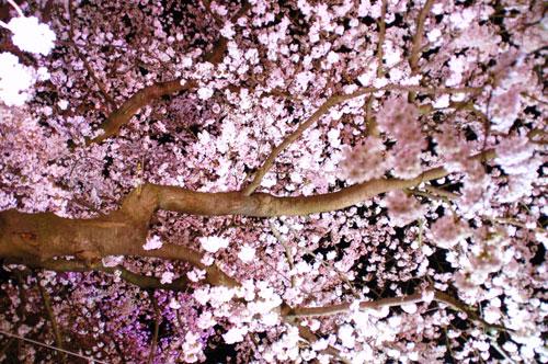 oogawara2010_11.jpg