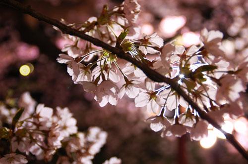 oogawara2010_13.jpg
