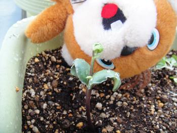20100714_soybeans.JPG