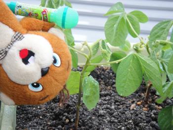 20100726_soybeans01.JPG